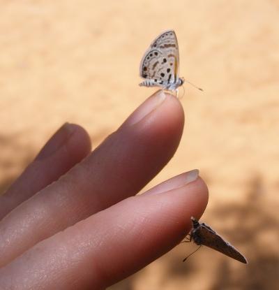 sandbutterfly3