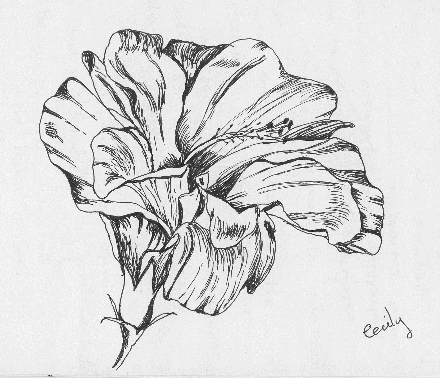 1000 images about hibiscus on pinterest hibiscus for Hibiscus flower tattoo sketches