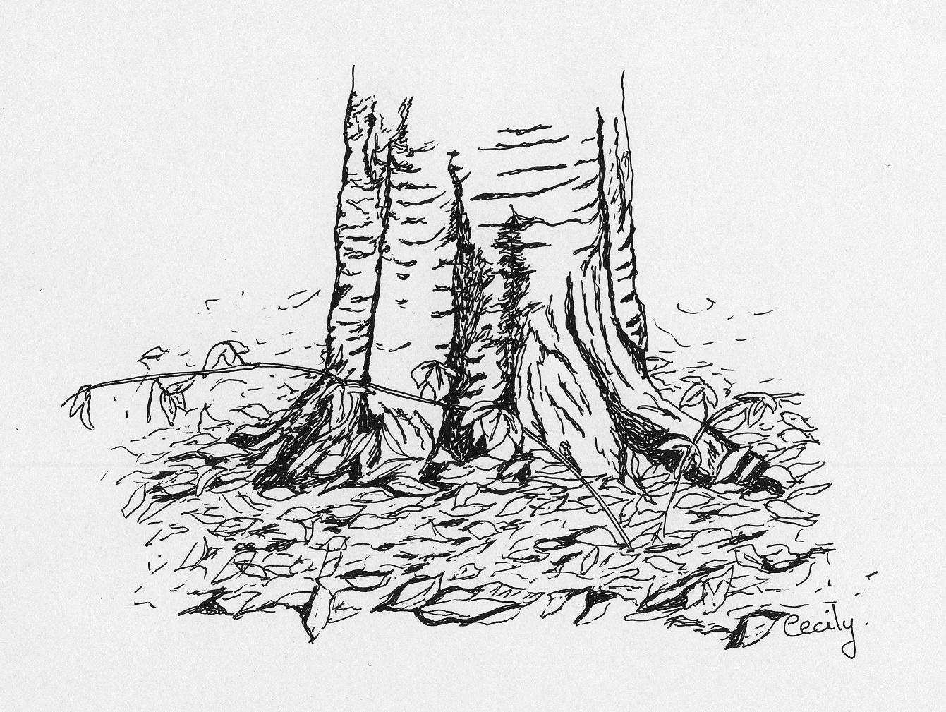 tree sketch | ButterflyHands